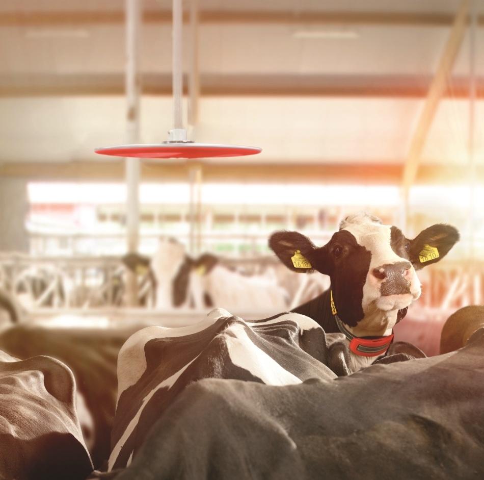 Cow Locator-1