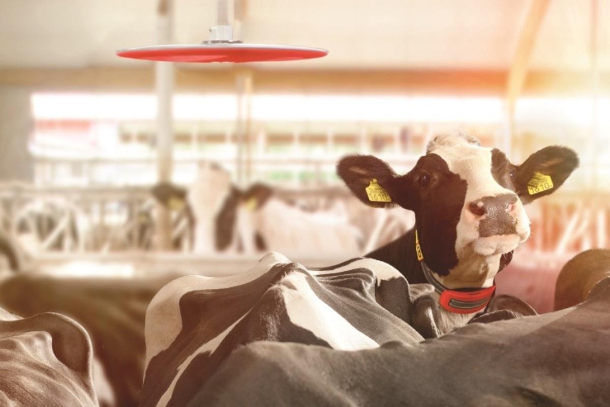 Cow Locator-1200x800