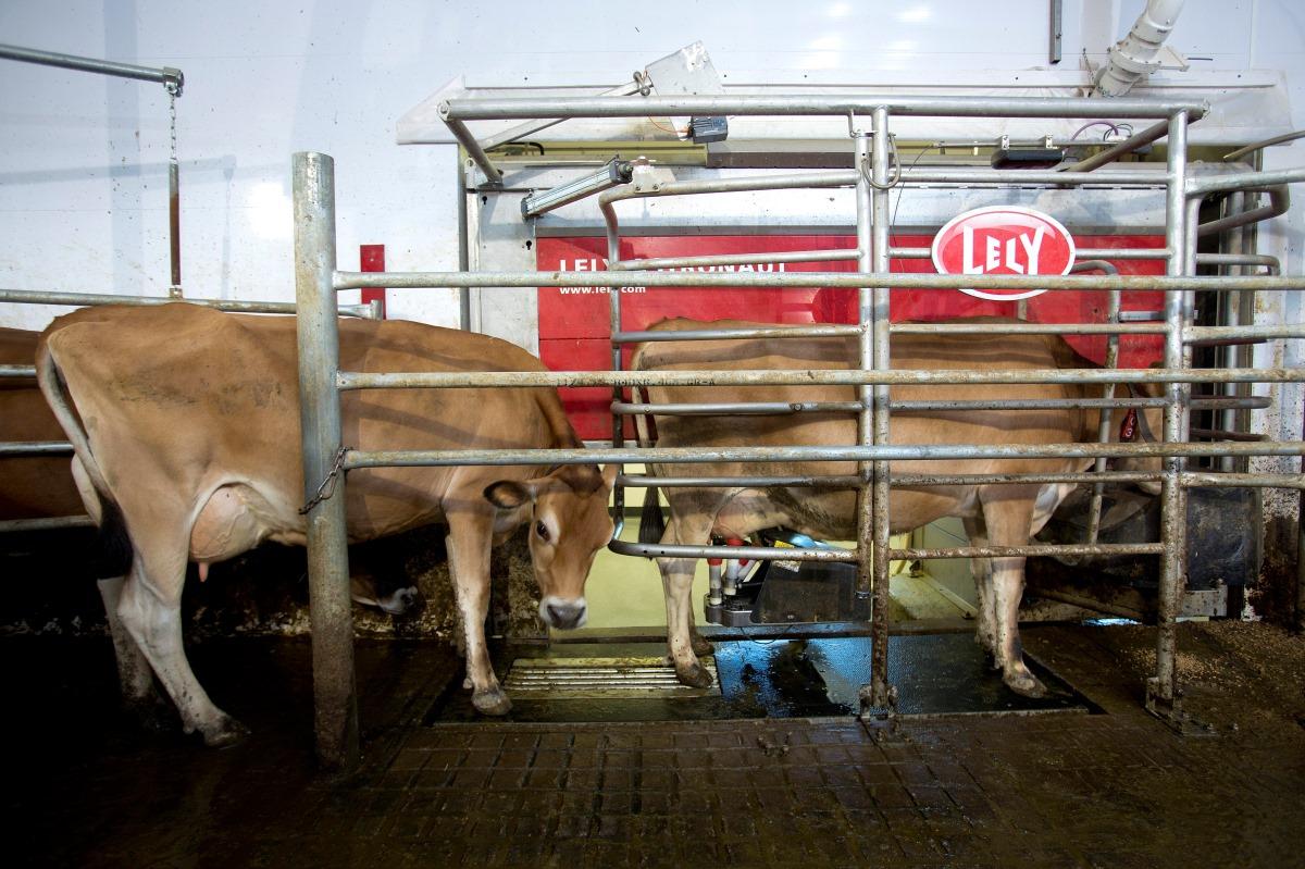 NICC Calmar Dairy Facility_1200x800